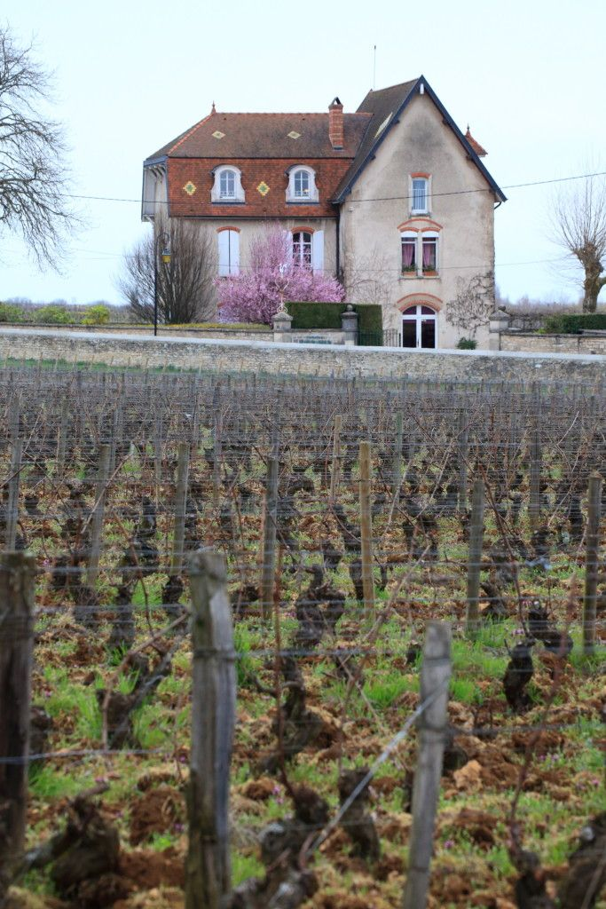 Burgundia, winnice WINO Piotr Gonciarz