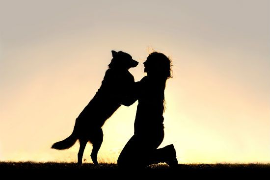 Dog Life Expectancy - Key Factors - https://plus.google.com/+VillageVetAnimalClinicPCBrokenArrow/posts/VQa8v8rTRWj
