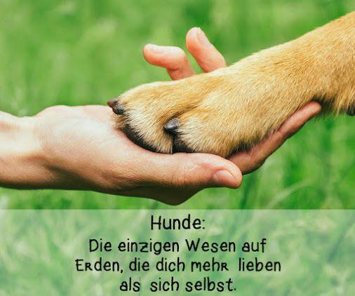 Teile dieses Bild mit allen Hunderbesitzern und gratuliere ihnen zum…