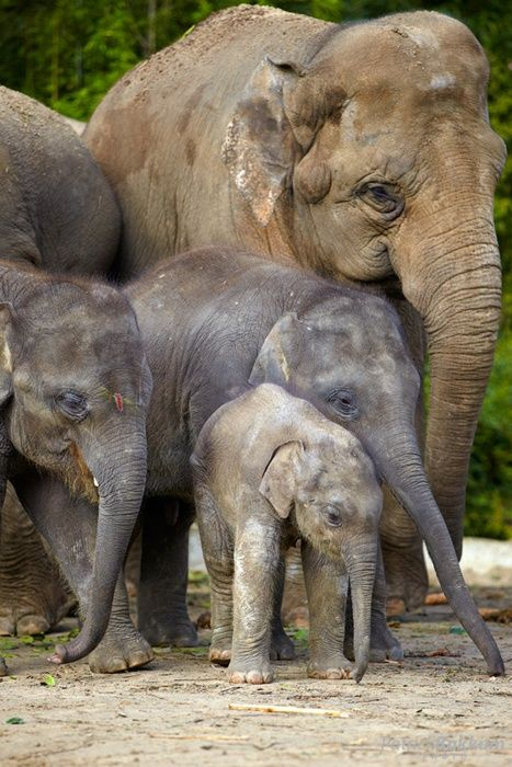 Beauty can often be found all over Africa! <<<< Begging your pardon, but those are Asian elephants. They live in Asia. XD
