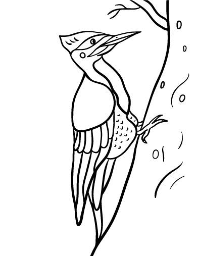 Printable Woodpecker Coloring Page Free PDF Download At