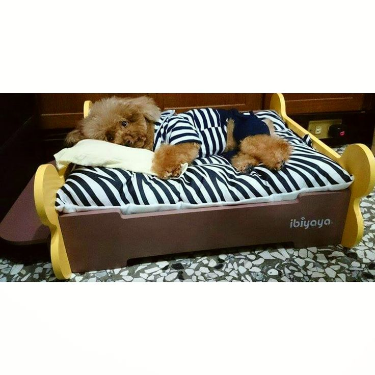 So cold!!!! so hard to get up from my cozy ibiyaya bed. ibiyaya.com
