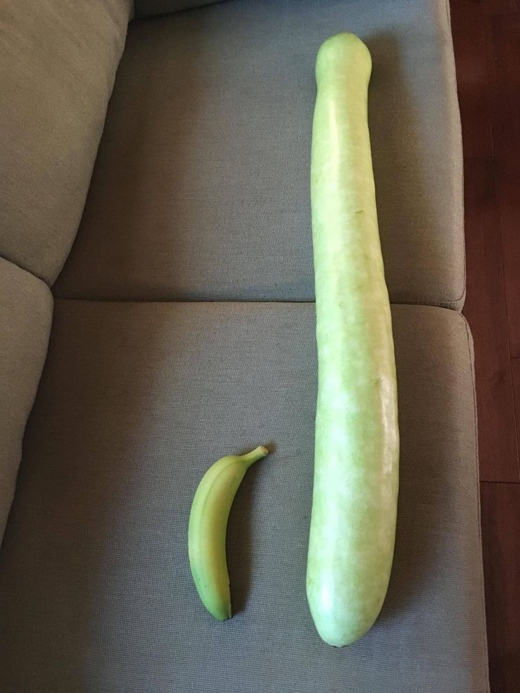 Large Green Melon (Banana for scale)