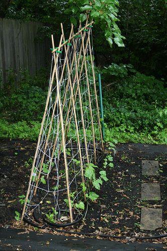 Bean Trellis My Garden Pinterest Gardens Diy 640 x 480