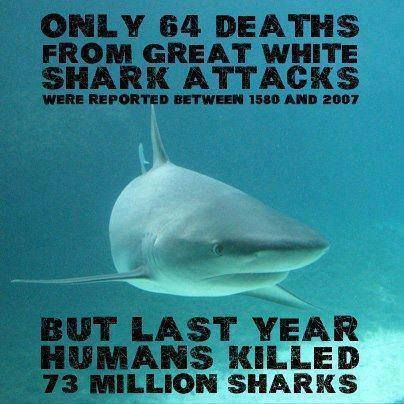 Sad to think our kids and their kids won't know the beauty in the oceans because we screwed it all up. Wake up people,  shark fun soup isn't worth eradicating a species!