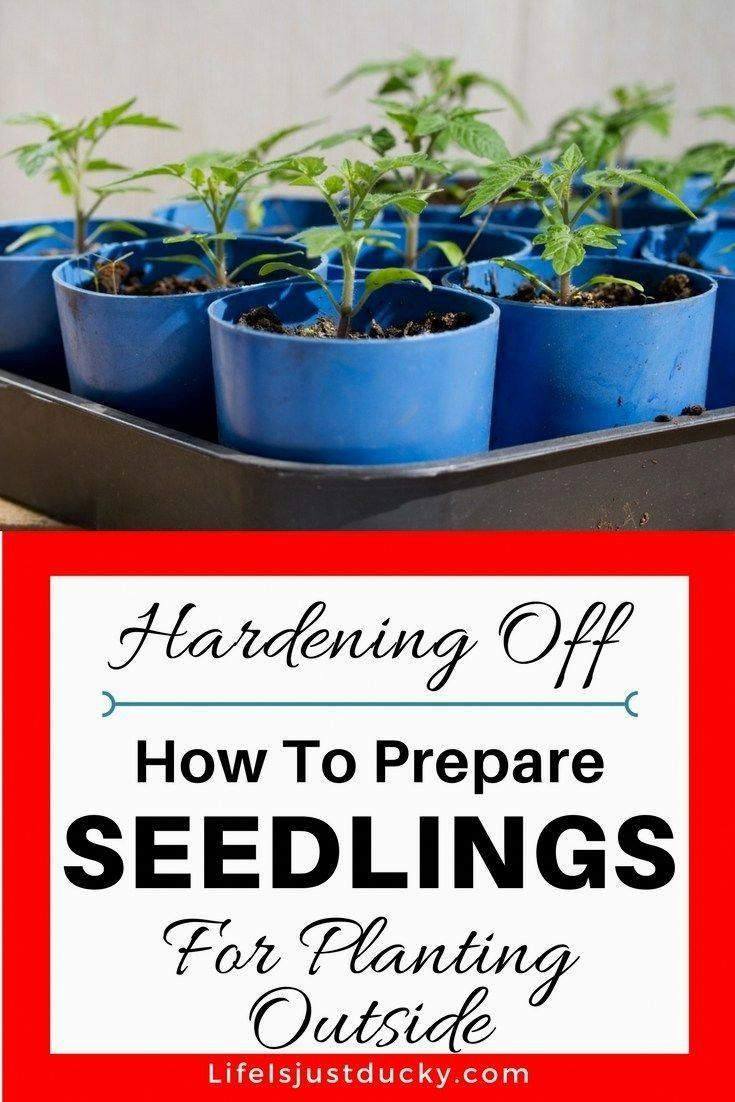 How To Hardening Off Seedlings – A Beginners guide for starting a garden and tra…