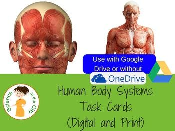 This includes a pack of eighteen Google Slides with 2-3 questions each which can be used as warm-ups, tickets out, review stations, formative assessment or task cards. They are digital task cards, and available as a pdf. The included questions focus on the following topics: -Human Body Systems -Homeostasis