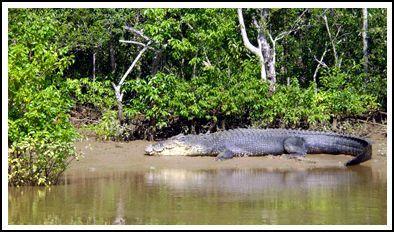 Save Sunderban......Save people of Sunderban. Visit Worlds largest Mangrove jungle and UNESCO World Heritage site.......