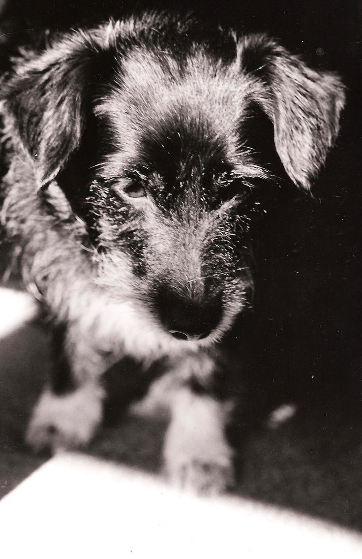 My dog, Maggie. Developed in a darkroom.