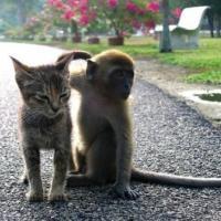 Monkey and Kitten