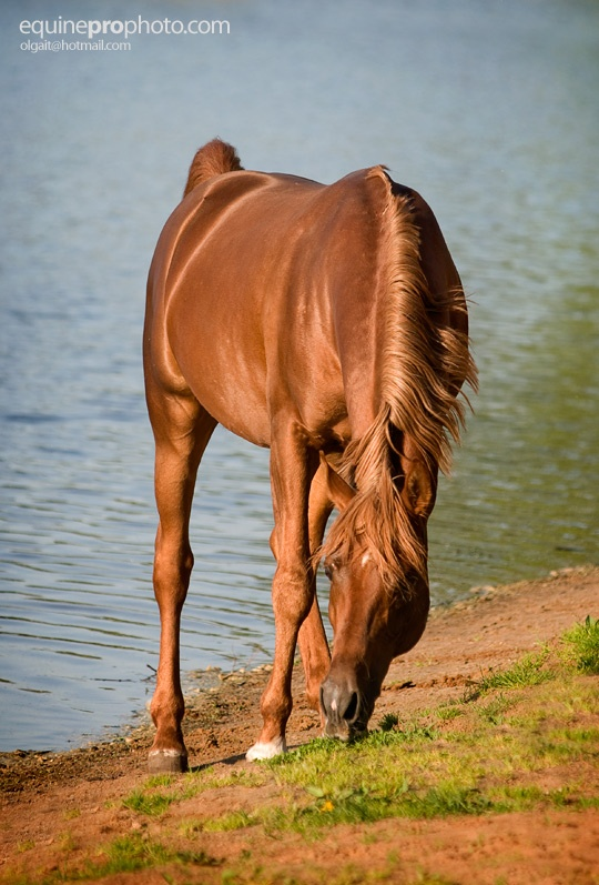 Equine Photography By Olga Itina Amazing Stuff The