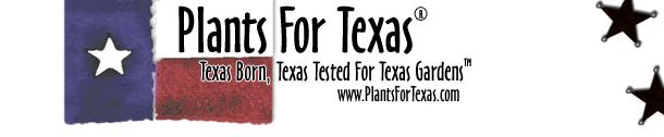 Muhlenbergia capillaris – Gulf Muhly - {Plants For Texas™Texas Born, Texas Tested For Texas Gardens™}
