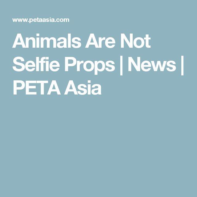 Animals Are Not Selfie Props   News   PETA Asia
