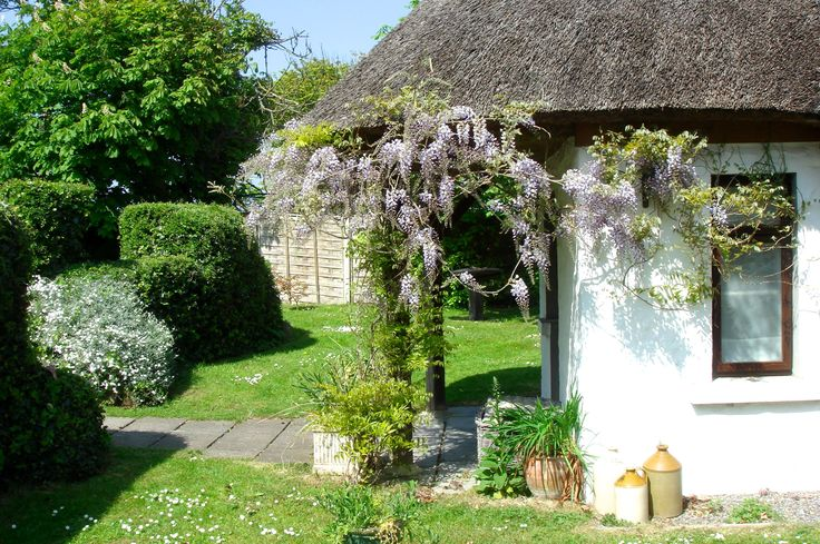 Little Orchard Cottage Wisteria In Full Bloom.