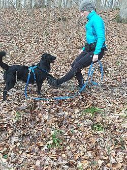Easy Dogs / In Bewegung mit Hund, Heike Benzing