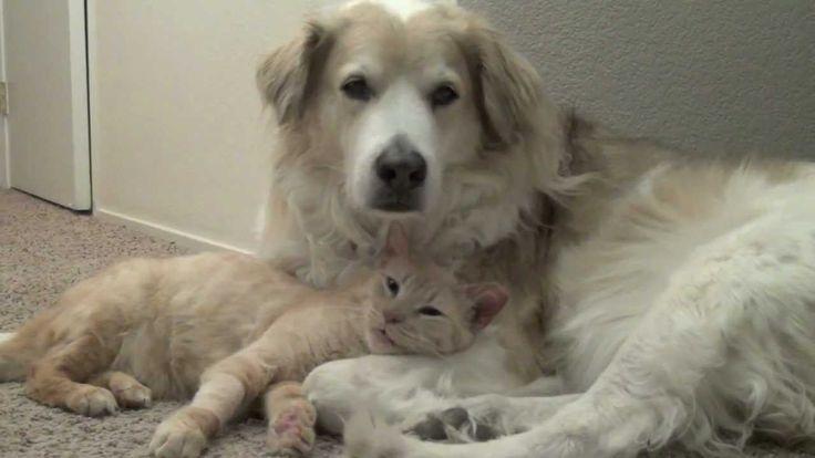 We ♥ Pets Blog