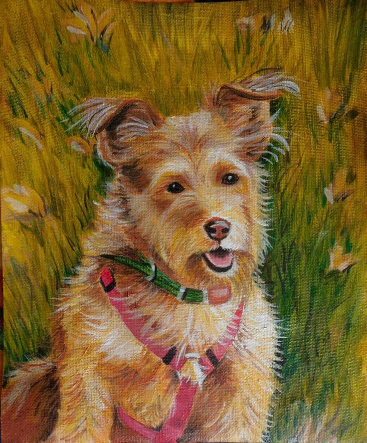 Sabinka the dog from the animal care organisation