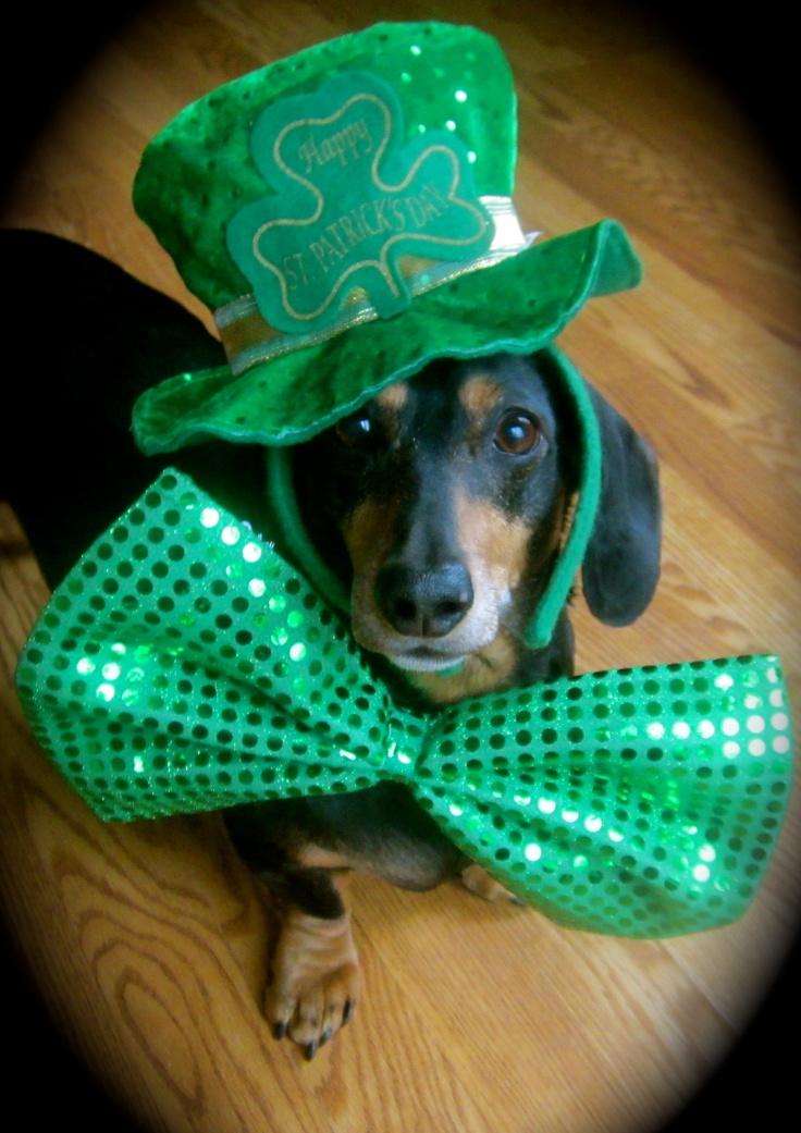 216 Best St Patrick S Day Pets Images On Pinterest