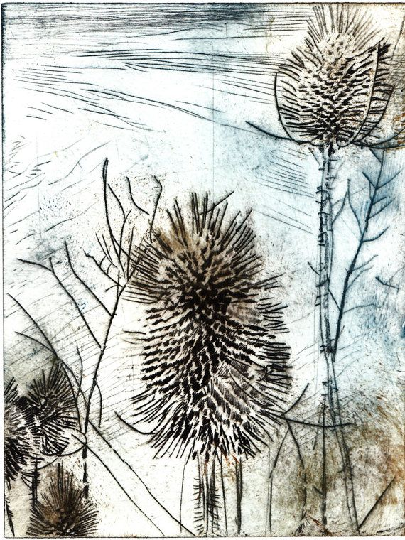 Teasels Original Dry Point Hand Pulled Artist Print by FrewinPrint, $30.00