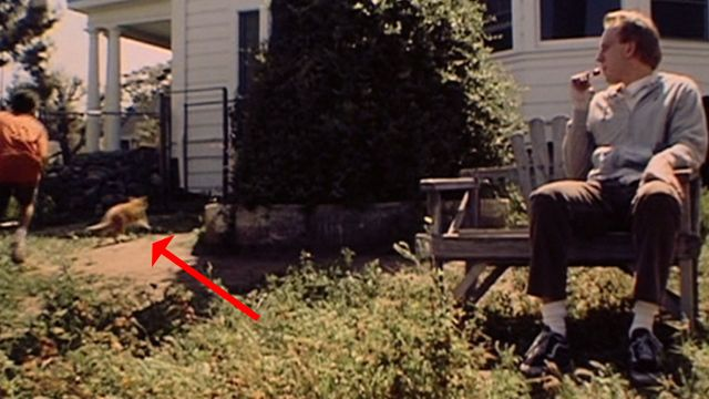 Purr Blur!  An orange tabby possibly named Siggy runs to take cover under the house in the film Chuck & Buck (2000).