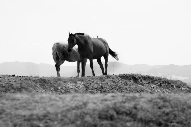 Horses near Radicofani,Val d'Orcia, Tuscany. Photo byLuca Di Monte