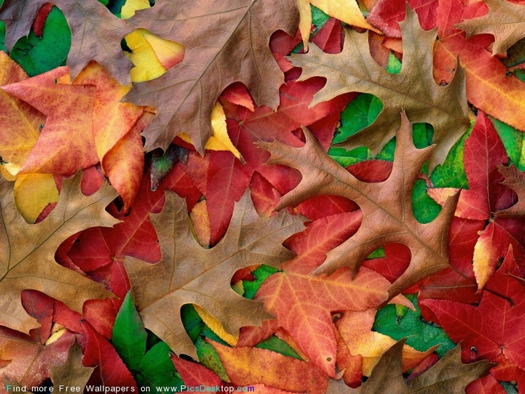 .: Fall Leaves, Awesome Autumn, Fall Colors, Awesome Pictures, Autumn Leaves, Fall Forever, Desktop Wallpapers, Autumn Colour, Mothers Natural