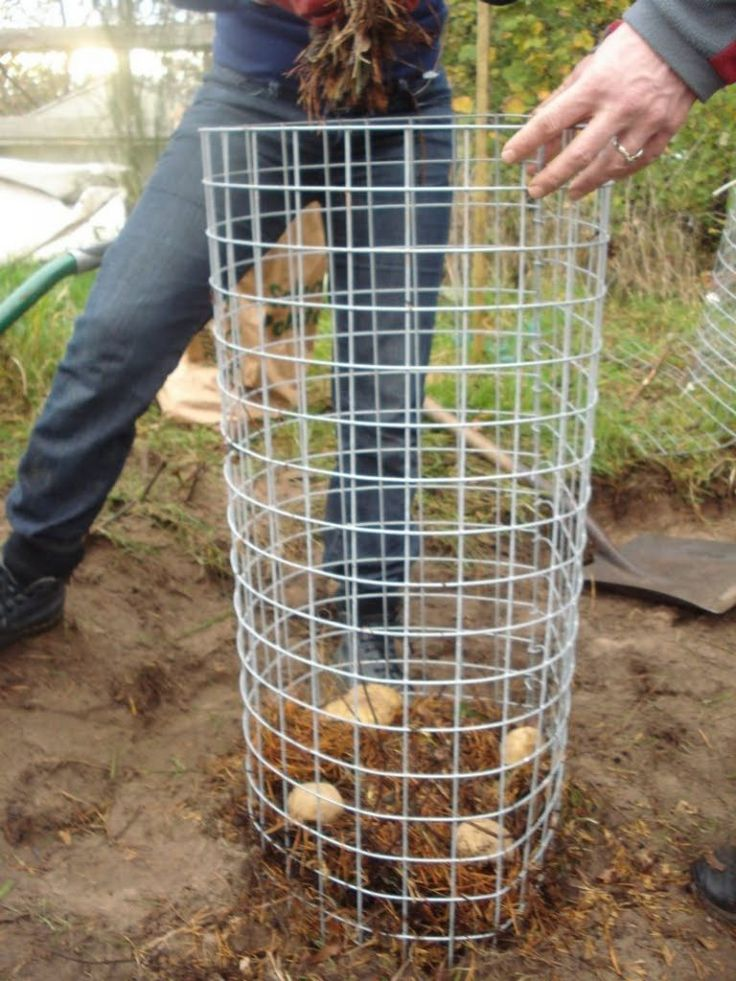 Potato Planters - wire alternative to the wooden potato tower (just can't harvest from the bottom as you go)