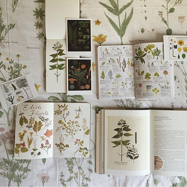 You guys look how awesome this photo is by @thecuriousnomad of my #smalladventuresjournal and her beautiful collection of botany books. Thank you so much for this photo! I love it.
