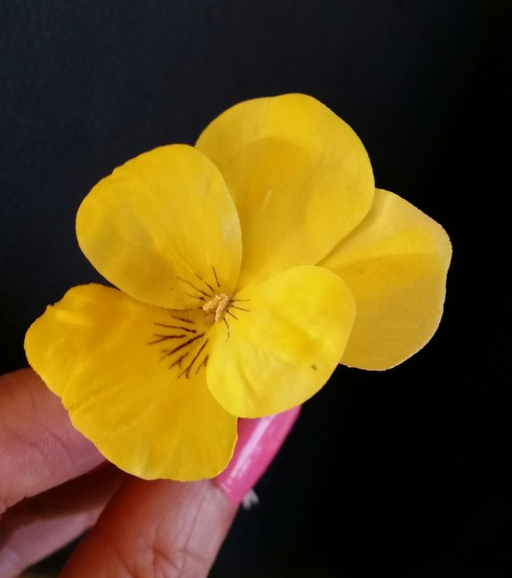 Simple sugar yellow pansy by https://www.facebook.com/UnusualCakesForYou