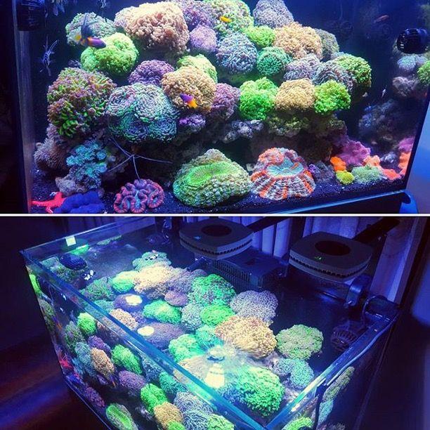 851 besten reef tanks bilder auf pinterest aquarien for Salzwasser aquarium