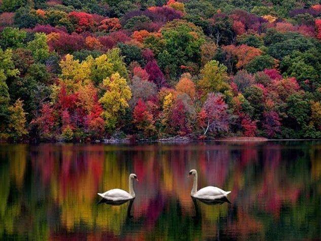 Восхитительная осень! Моя душа повенчана с ней, и если бы я был птицей, я бы полете вокруг Земли в поисках следующей Осени! Джордж Элиот