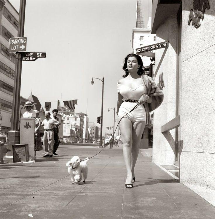 Hollywood and Vine dog walking