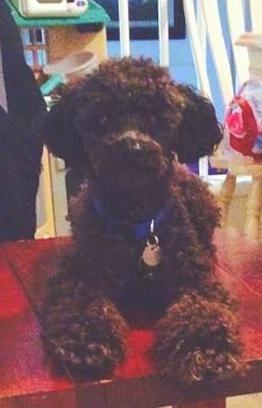 Dog Adoption Seattle Tacoma