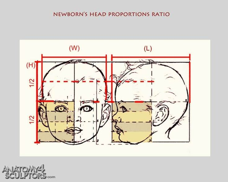 32 best Head & Body Proportions images on Pinterest ...