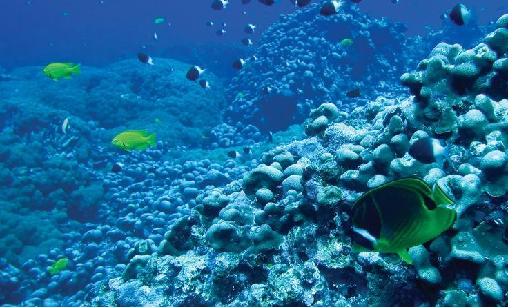 Schillernde Fischschwärme NORTH ISLAND 6* │ SEYCHELLEN
