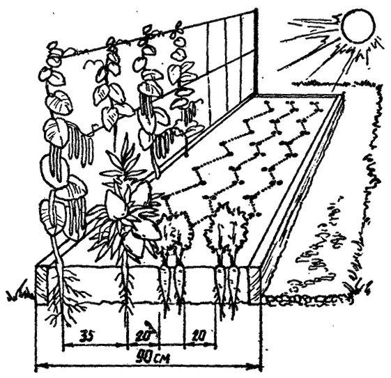 Схема посадки картинки капусты духовке