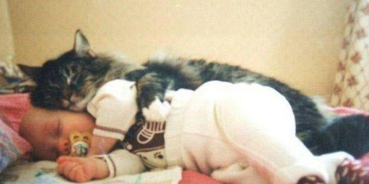 Αυτές οι 26 Φωτογραφίες με Γάτες που Αγκαλιάζουν Μωρά θα σας Φτιάξουν τη Διάθεση όσο δύσκολη κι αν ήταν η Μέρα σας Σήμερα! Crazynews.gr