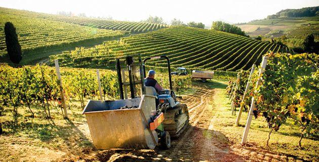 Der Barolo ist der König unter den Weinen des Piemont. Die Region Langhe, seine Heimat, hat aber viel mehr zu bieten. Die ansässigen Winzer entdecken alte Rebsorten wieder.