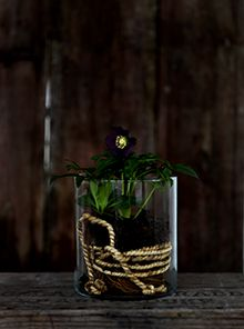 Love finding new ways to have plants indoors. The rope on the inside, fantastic.