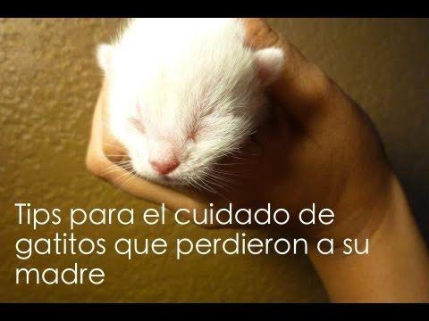 Guía para cuidar gatitos recién nacidos - YouTube