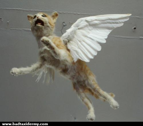 taxidermies loupees chat ange   Taxidermies loupées   2   tigre taxidermie singe puma photo ours lynx image horreur fail empaille empaillage...