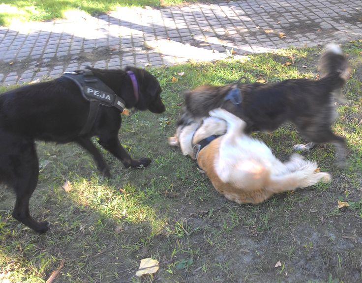 20/09/2015 - Torino con Peja e Ollie