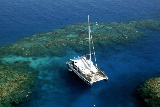 Great Barrier Reef Information and Tours - Skyrail Rainforest Cableway