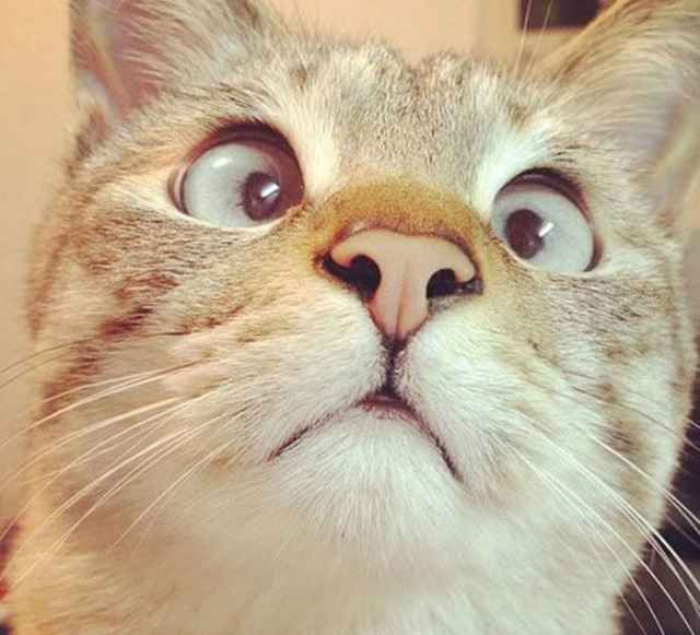 Best LOVE THEM ALL Images On Pinterest Dogs Ugly Dogs And - 35 cats pulling ridiculous faces imaginable