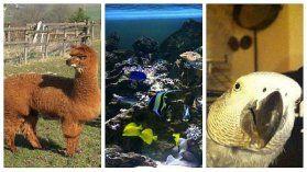 http://bourgogne.france3.fr/2014/03/19/les-animaux-exotiques-ou-insolites-qui-vivent-pres-de-chez-nous-435871.html
