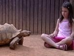 schildpad neemt zijn huis mee