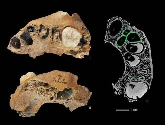 Fossils From Unknown Species Of Human Discovered   IFLScience