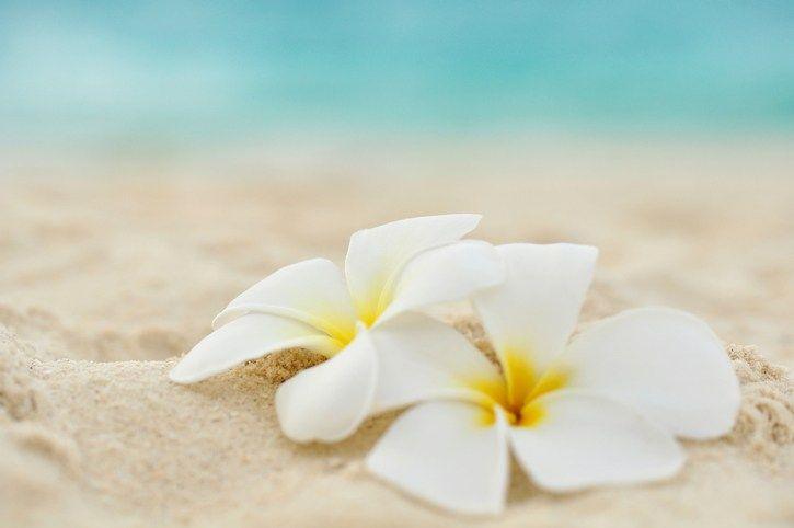 プルメリア Plumeria 2020 ハワイ 花 プルメリアの花 ネイチャー