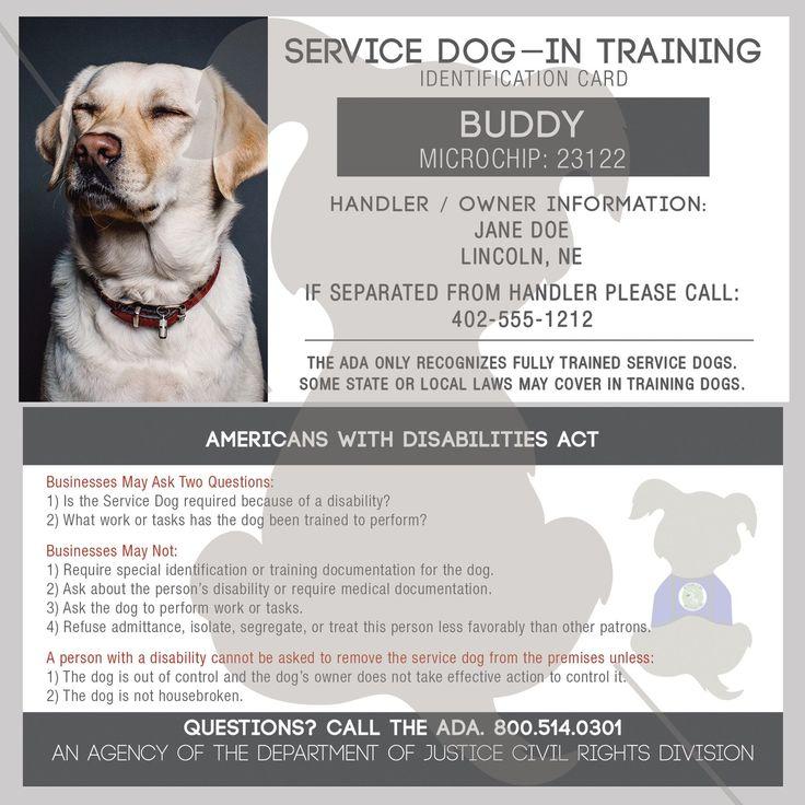 Best 20+ Dog training school ideas on Pinterest | Best friends vet ...