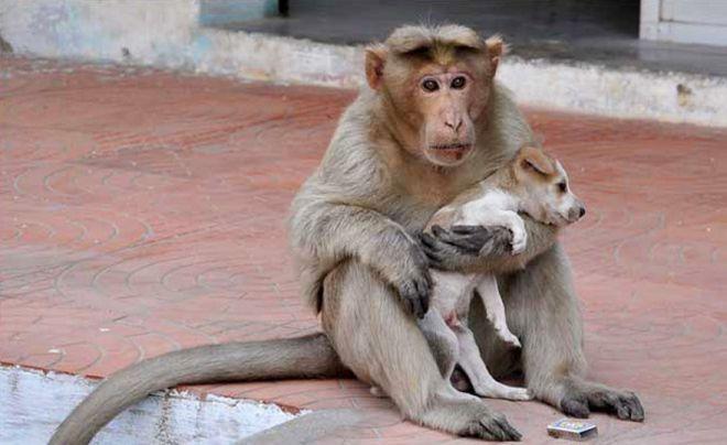 обезьяна и щенок